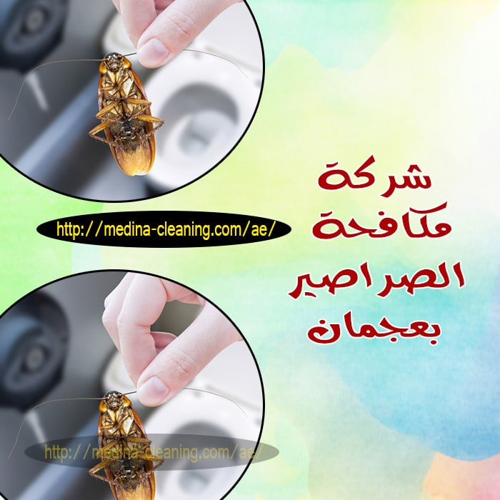مكافحة الصراصير بعجمان - ابادة صراصير بعجمان