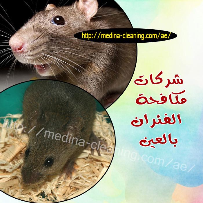 شركات مكافحة الفئران العين