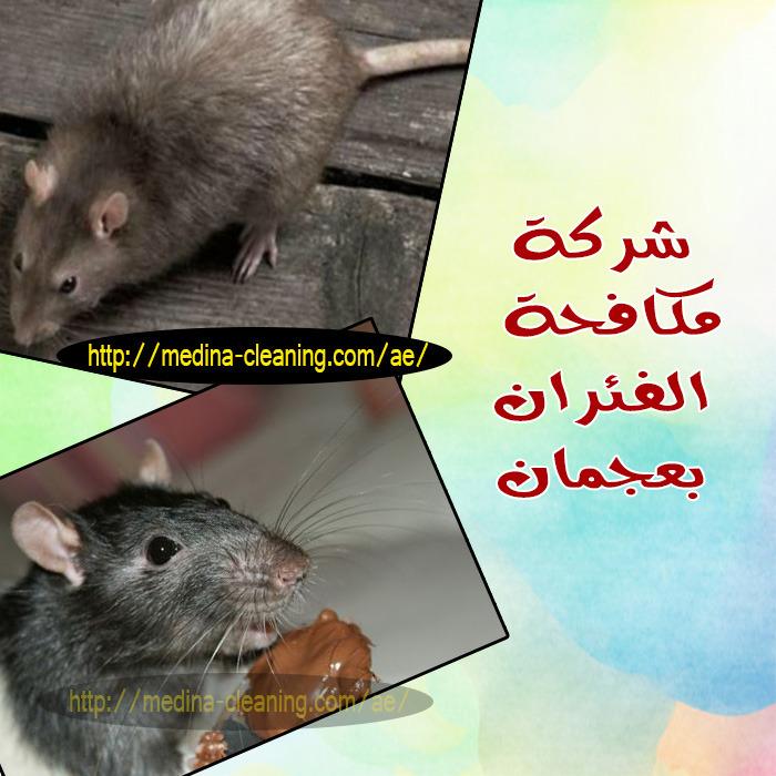 مكافحة الفئران بعجمان- ابادة القوارض بعجمان