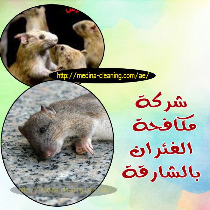 مكافحة الفئران بالشارقة - ابادة القوارض بالشارقة