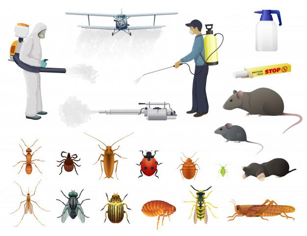 مكافحة حشرات ام القيوين - مكافحة رمة ام القيوين