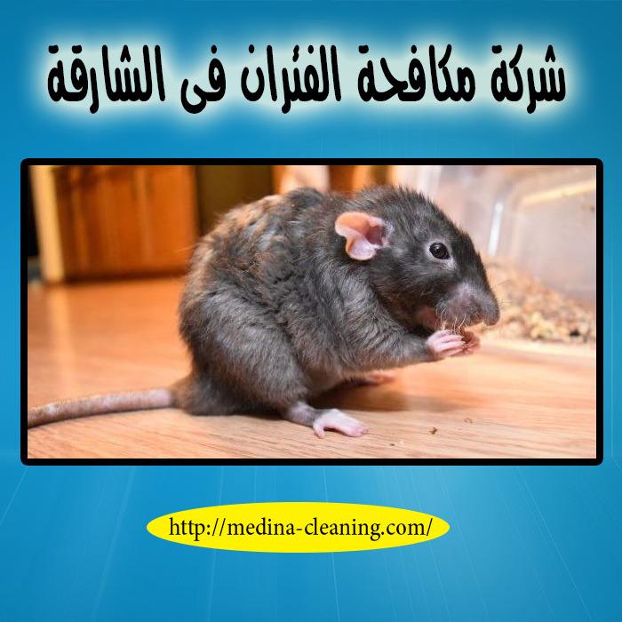 شركة مكافحة الفئران فى الشارقة