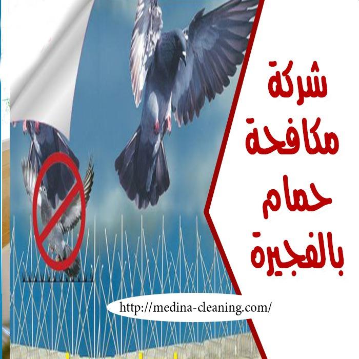 ارخص شركة مكافحة حمام بالفجيرة - شركات مكافحة طيور بالفجيرة